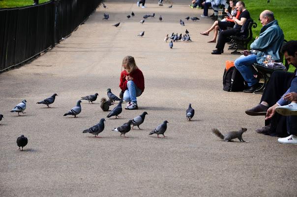 scoiattoli e persone a Londra di paolo.cosentino