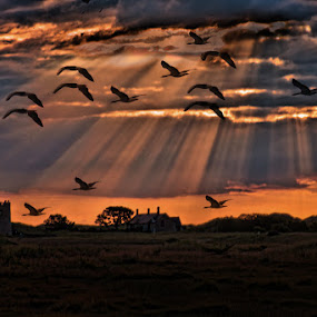the long flight home by Stephen Hooton - City,  Street & Park  Vistas ( home, houses, sunbeams, church, sunset, beams, birds,  )