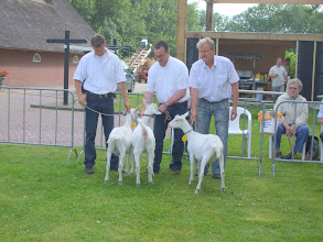 Photo: Rubriek 2: witte lammeren geboren tussen 1 februari en 10 februari 2012.  1a. Celine 36, 1b. Aafke van de Dijk, 1c. Celine 37.