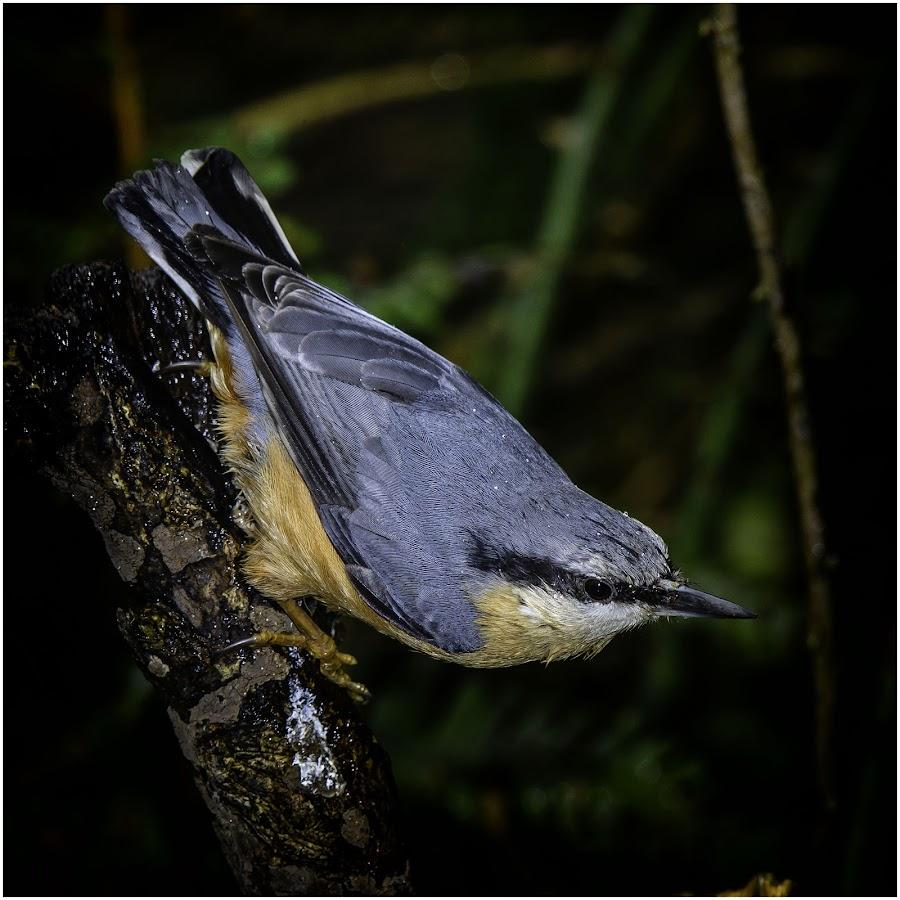by David Bevan - Animals Birds