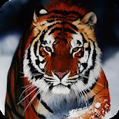Tiger Live Wallpaper Animal