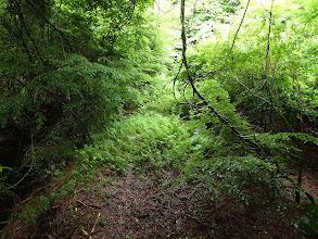 広い道だがシダが生い茂り