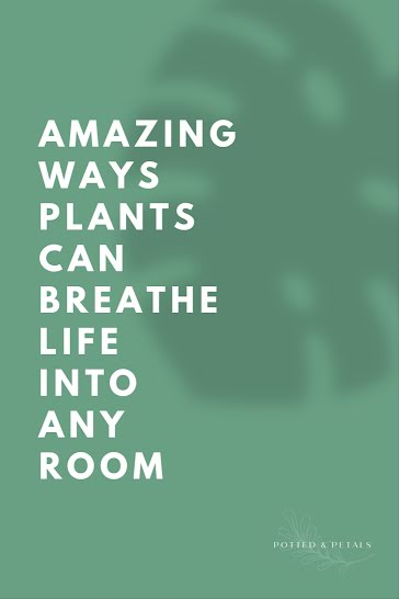 Breathe Life Into Any Room - Pinterest Pin Template