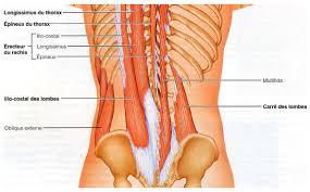 Retirer le lumbago aux maladies des reins