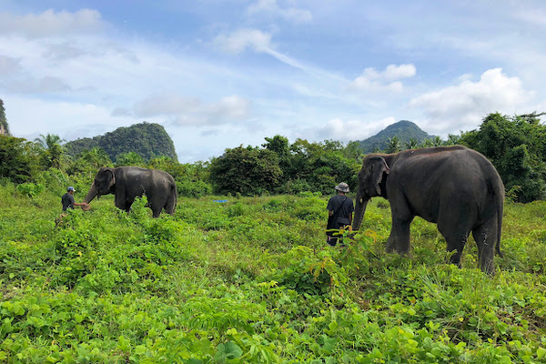 Elephant Sanctuary is located in the rural area of Ao Luk