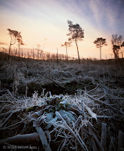 Photo: To Survive This was an image I took just over a year ago, its in a place called Delemere Forest in Cheshire UK, I am fortunate as this is only some 10 miles or so from home and its one of my favourite stomping grounds. This year we had a very heavy hoar frost and I had to get up very early for this. I wanted a combination of the sunrise warmth and the cold of the land. As I wandered around the forest I came across this clearing that looked as though some deforestation had been going on. The first impression you get as you walked into it was almost like the aftermath of a small bomb going off and it was fairly desolate in comparison to what I walked through. Even though it was freezing cold at the time I loved not only walking around here but the silence of the area too, for the most part I was the only one making any sound. I noticed this small plant coming through the undergrowth or what was left of it and it struck me as to how nature always comes back and claims her own. No doubt when we as a race are long gone she will do the same with the rest of the planet.