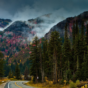 Fall by Muzo Gul - Landscapes Mountains & Hills ( redtrees, fallcolor, pwcautumn, forest, starvedrockpark )