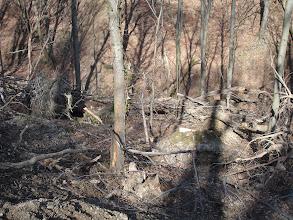 Photo: i ovdje je šuma opustošena nedavnim vjetrovima i ledom