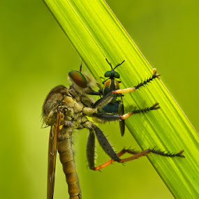 by Yudhi Hendra - Animals Insects & Spiders