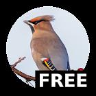 Happy Birding Journal - (FREE) icon