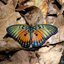 The Biodiversity of Ghana