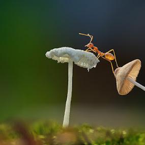 Monitoring  by Angga Putra - Animals Insects & Spiders ( mushroom, macro, ant )