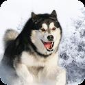 Husky Siberian Pack 2 Lwp icon