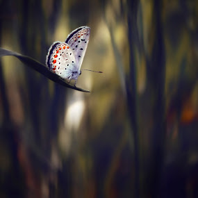 single butterfly by Yılmz Doğn - Animals Insects & Spiders