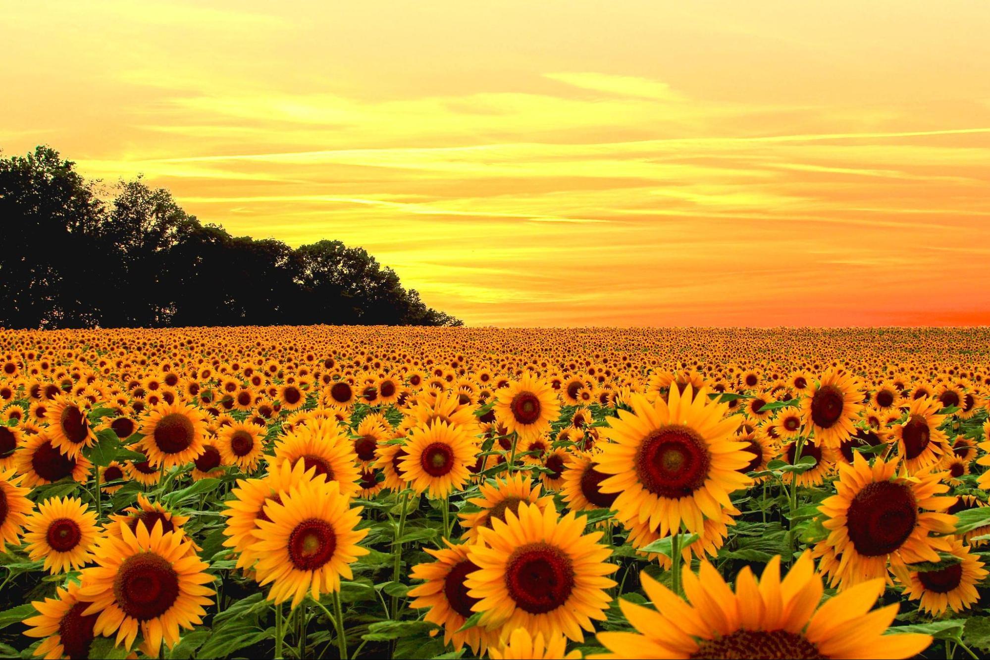 ( Mơ thấy hoa điều lành hay điều giữ)