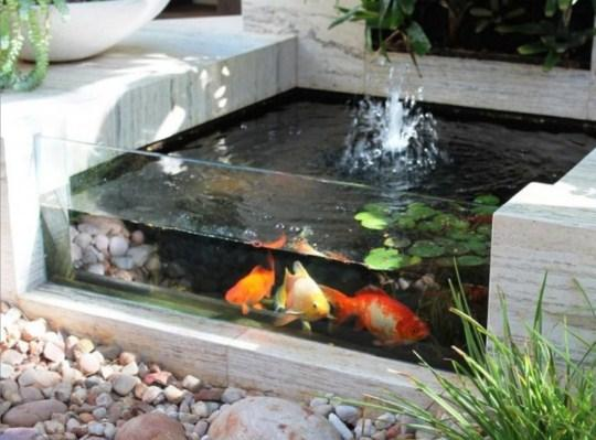Fish pond minimalist android apps on google play for Simple fish pond