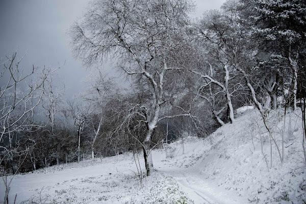 Fredda Neve invernale di Matteo