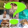 Adivina el mamifero