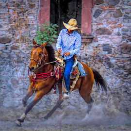 training, mexico by Jim Knoch - Animals Horses