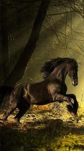 Živé Tapety Koně ? Krásné Obrázky - náhled