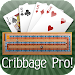 Cribbage Pro Online! Icon