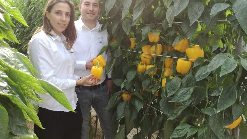 Noelia Martínez Robles y Luis Twose, trabajadores de Seminis/Monsanto, junto a una planta de pimiento TORMES.