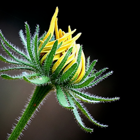 Version 4 by Noel Kapica - Flowers Single Flower