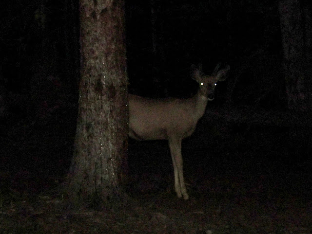 Deer creepin' on our camp