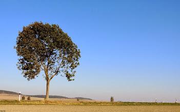 Photo: The First  #happynewyear  #landscapephotography // +Landscape Photography #hqsplandscape // +HQSP Landscape #tree  #blue  #bluesky