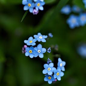 by Ani Desu - Nature Up Close Flowers - 2011-2013 (  )