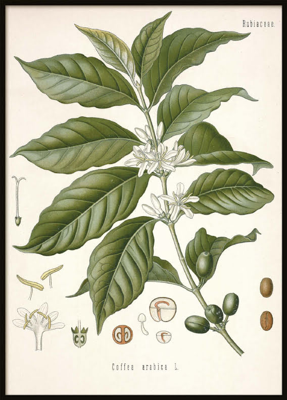 Vintage Coffee, Poster