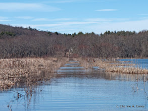 Photo: Central dike trail