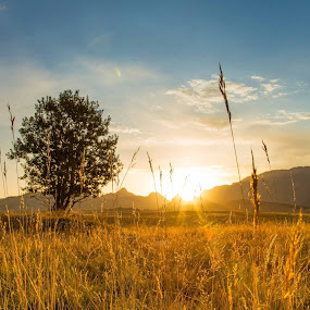 Sunrise Durmitor  by Zoran Savic - Uncategorized All Uncategorized ( sky, tree, landscape photography, sunrise, durmitor, fields )