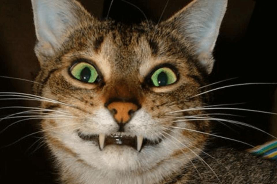 cat urinary tract