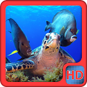 Sea Turtle Video LiveWallpaper