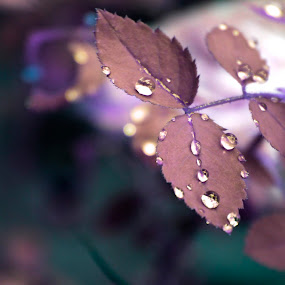 by Shivalkar Jha - Nature Up Close Leaves & Grasses