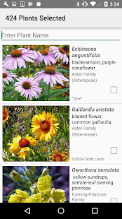 North Dakota Wildflowers- screenshot thumbnail