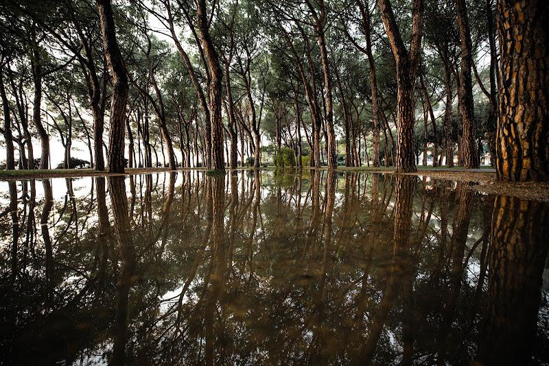 anche la natura ha il suo specchio di Maurizio Soravito