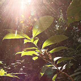see the light by Sayan Basu - Nature Up Close Leaves & Grasses ( leaf, light )
