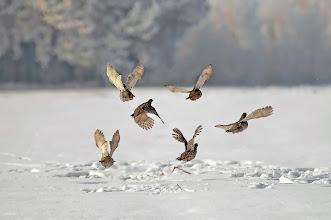 Photo: Partridges in the snow / Winter 2004 / http://lepidoptera-butterflies.blogspot.com/ https://www.facebook.com/pages/Macro-Photography-Do-Dema/540798875993427