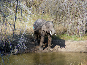Photo: Cautious approach to water hole at Bandipur