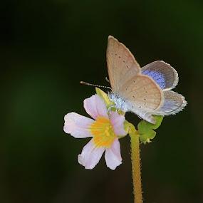 by Paramasivam Tharumalingam - Flowers Flowers in the Wild (  )