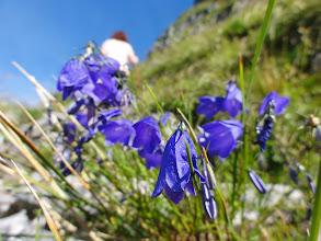 Photo: Vegetation im Hochgebirge (Loser, Altaussee)