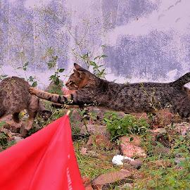 Jump by Hans Dihan - Animals - Cats Playing ( playing, cat, chasing, happy, backyard,  )