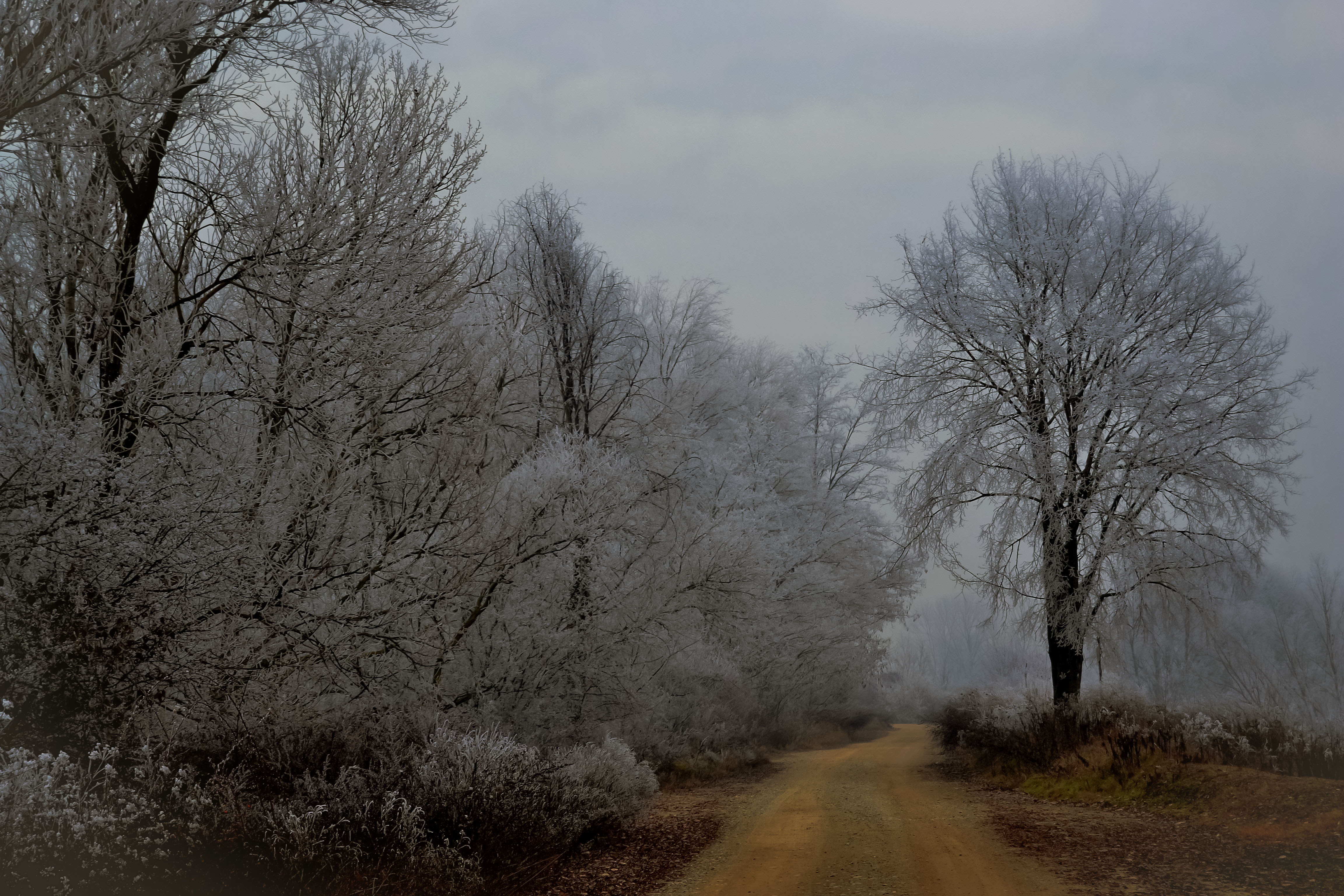 Un freddo inverno di vaiolet