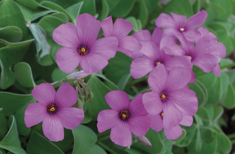 fiori di campo  di Tifone-63