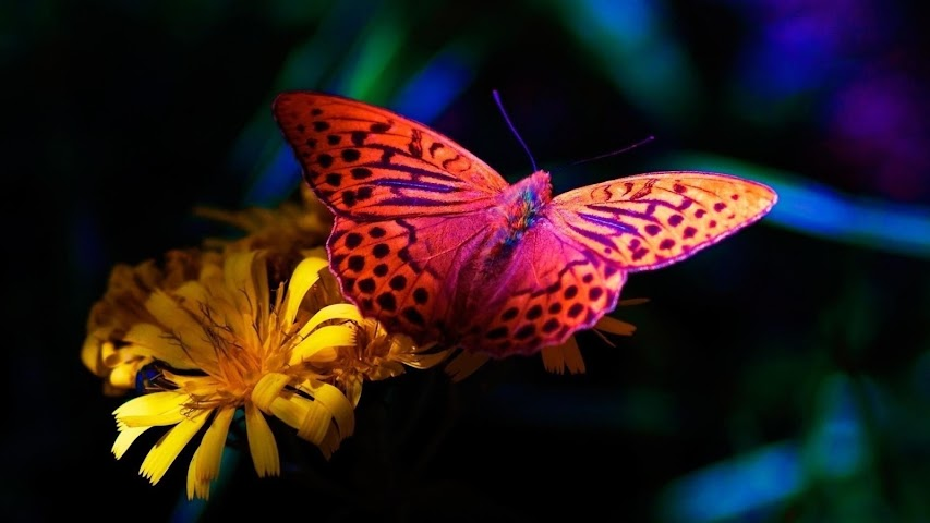 android Best Butterfly Wallpapers Screenshot 3