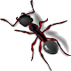 Download ANT SMASH For PC Windows and Mac