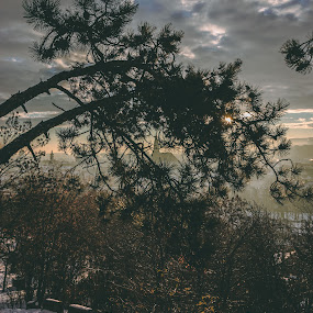 Cluj in the morning  by Paul Voie - Landscapes Sunsets & Sunrises ( foggy, sunset, winter, trees, landscape,  )
