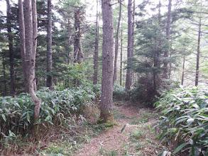 林道はすぐ